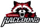 esslingen-raccoons